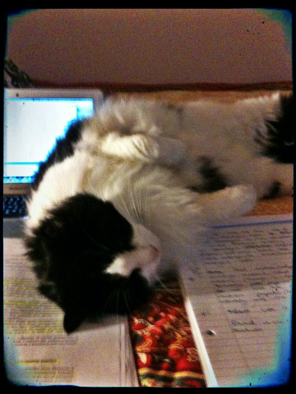 Miss Maddie 'helping' me write my assignment