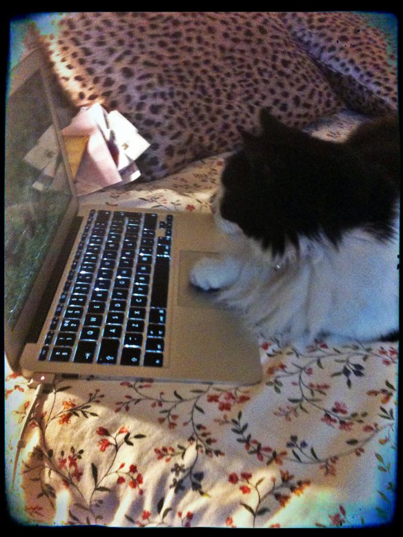 Miss Maddie doing a bit of online shopping.